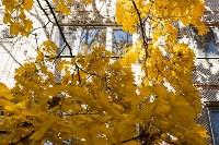 Золотая осень в Туле-2019, Фото: 57