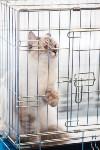 Международная выставка кошек. 16-17 апреля 2016 года, Фото: 67