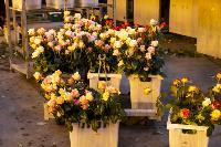 Миллион разных роз: как устроена цветочная теплица, Фото: 41