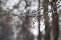 Мартовский снег в Туле, Фото: 66