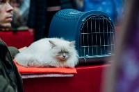 """Выставка """"Пряничные кошки"""" в ТРЦ """"Макси"""", Фото: 33"""
