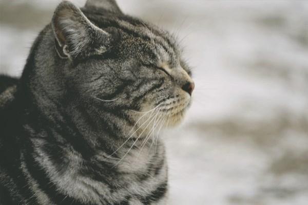 котик замерз.