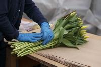 Тюльпаны , Фото: 30