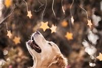Самая счастливая собака в мире!, Фото: 9