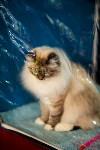 Пряничные кошки, Фото: 6