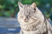 Тульские котики, Фото: 29