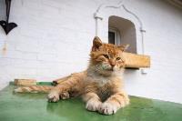 Тульские котики, Фото: 20