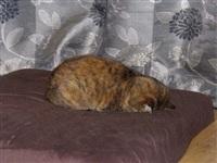 Котики устали, Фото: 3