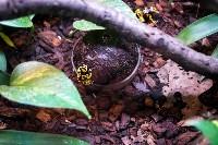 Тульский экзотариум: животные, Фото: 8