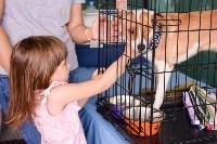 В тульском «Макси» прошел благотворительный фестиваль помощи животным, Фото: 25