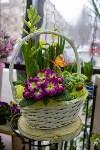 Ассортимент тульских цветочных магазинов. 28.02.2015, Фото: 21