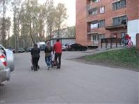 роща, Фото: 7