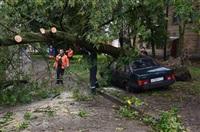 На автомобиль упало дерево, Фото: 8