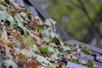 Осень, Фото: 20