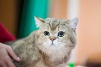В Туле прошла выставка «Пряничные кошки» , Фото: 97