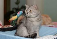 Выставка кошек в Туле, Фото: 3