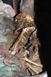 Скелет в доме на ул. К. Маркса (18+), Фото: 6