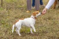 Международная выставка собак, Барсучок. 5.09.2015, Фото: 55