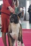 Выставка собак в Туле 26.01, Фото: 47