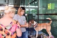 В тульском «Макси» прошел благотворительный фестиваль помощи животным, Фото: 24