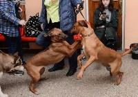 """Выставки собак в ДК """"Косогорец"""", Фото: 51"""