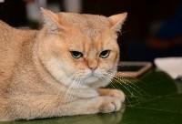 Выставка кошек в Искре, Фото: 72