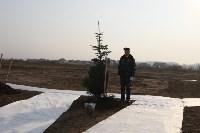 Возле мемориала «Защитникам неба Отечества» высадили еловую аллею , Фото: 11