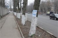 Обклейка деревьев рекламой, Фото: 6