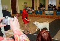 """Выставки собак в ДК """"Косогорец"""", Фото: 34"""