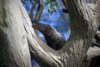 Тульский экзотариум: животные, Фото: 27