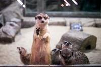 Тульский экзотариум: животные, Фото: 58