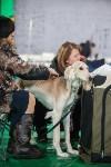 Выставка собак в Туле, Фото: 53