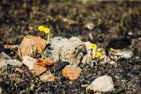 Весна 2020 в Туле: трели птиц и первые цветы, Фото: 8
