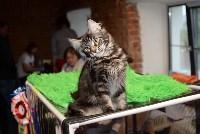 Выставка кошек в Искре, Фото: 17
