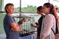 В тульском «Макси» прошел благотворительный фестиваль помощи животным, Фото: 37