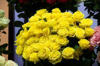 Цветы , Фото: 1