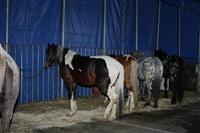 Цирк огромных зверей. Тула, Осиновая гора, 1, Фото: 10