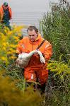 В Туле спасли лебедя с одним крылом, Фото: 28