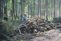 В Туле проводят работы по благоустройству зон отдыха. 26 июля 2014 год, Фото: 3