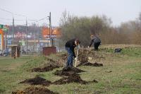 Надежда Школкина и Дмитрий Миляев высадили клены возле Ледового дворца, Фото: 4