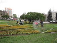 В Туле ко Дню Победы высадили 88, 5 тысяч цветов, Фото: 7