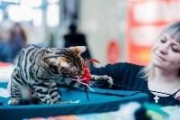 """Выставка """"Пряничные кошки"""" в ТРЦ """"Макси"""", Фото: 65"""