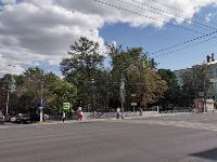 В Туле гибнут деревья, Фото: 31