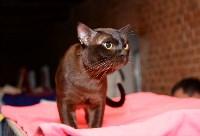 Выставка кошек в Искре, Фото: 32
