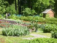 Травы и цветы Ясной Поляны, Фото: 5