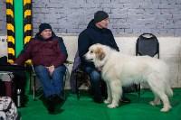 Выставка собак в Туле, Фото: 75