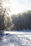 Зимняя сказка Платновского парка, Фото: 13