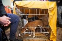 Всероссийская выставка собак 2017, Фото: 68