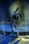 Aqua Show в Тульском цирке, Фото: 13