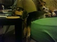 Кошки и собаки, проигравшие битву с мебелью, Фото: 18